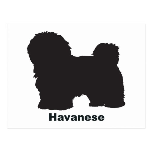 Havanese Postal