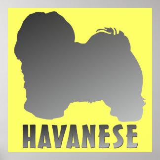 Havanese Poster
