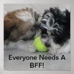 Havanese puppies - Friendship - BFF Print