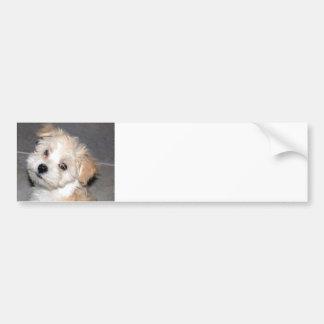 Havanese Puppy Car Bumper Sticker