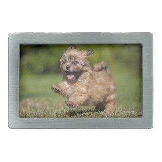 Havanese Puppy Gallops Across The Grass Belt Buckle