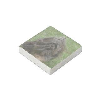 Havanese Puppy Stone Magnet
