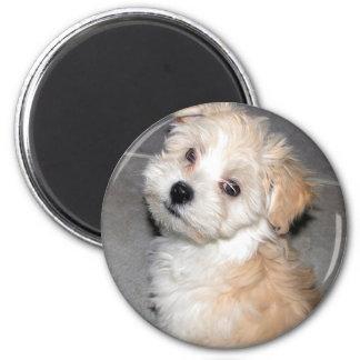 Havanese Puppy 2 Inch Round Magnet