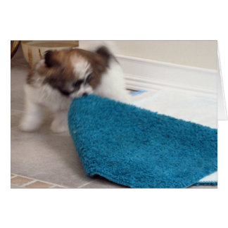 Havanese Puppy moving his rug Card
