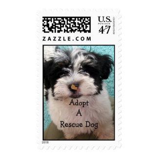 Havanese Puppy Postage