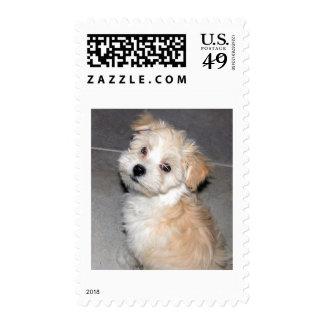 Havanese Puppy Stamp