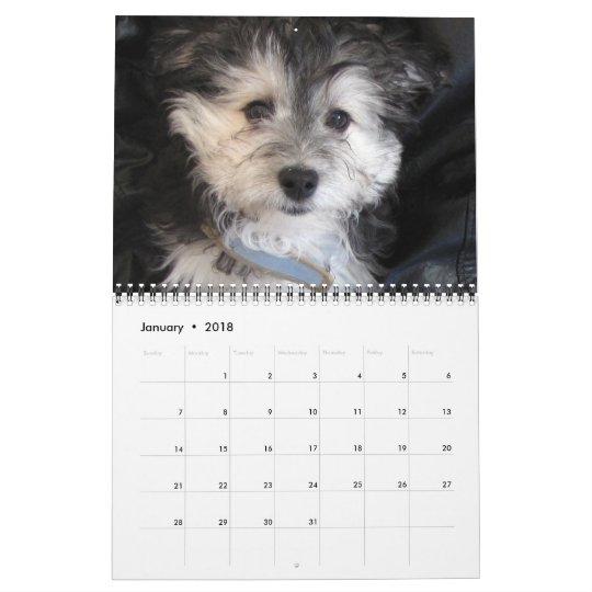 Havanese Puppy Rescue 2011 Calendar