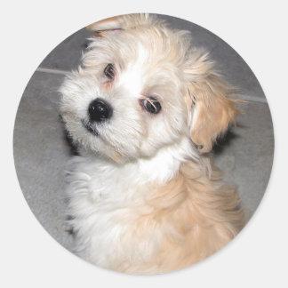 Havanese Puppy Sticker