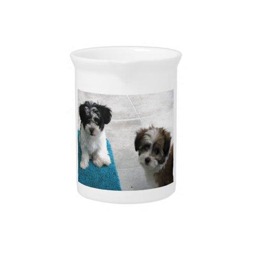 Havanese Rescue Puppies Black White Gray Beverage Pitchers