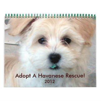 Havanese Rescue Puppies Calendar 2012