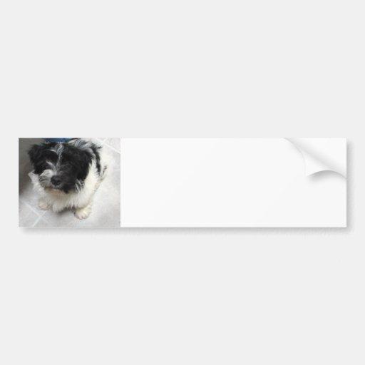 Havanese Rescue Puppy black and white Bumper Sticker