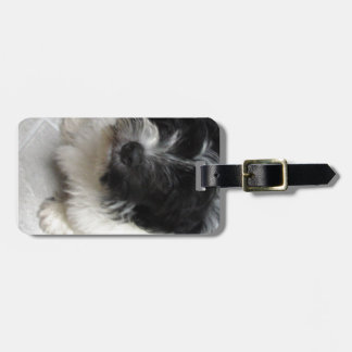 Havanese Rescue Puppy black and white Luggage Tags
