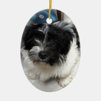 Havanese Rescue Puppy black and white Double-Sided Oval Ceramic Christmas Ornament