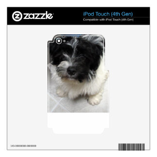 Havanese Rescue Puppy black and white iPod Touch 4G Decal