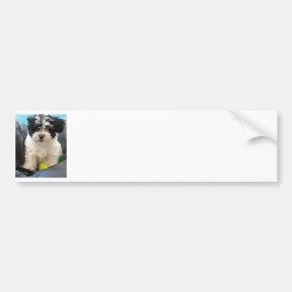 Havanese Rescue Puppy Black White Car Bumper Sticker