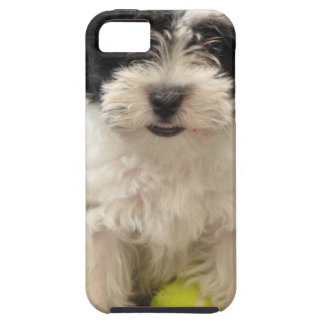 Havanese Rescue Puppy Black White iPhone 5 Cover
