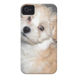 Havanese Rescue Puppy Tan Beige iPhone 4 Cover