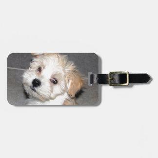 Havanese Rescue Puppy Tan Beige Luggage Tag