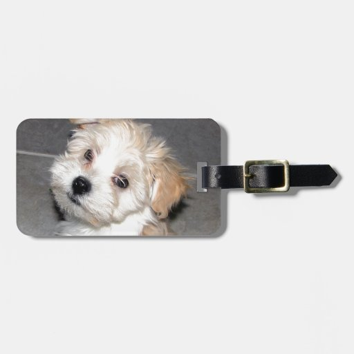 Havanese Rescue Puppy Tan Beige Tags For Bags