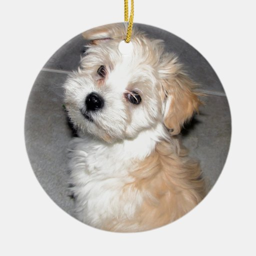 Havanese Rescue puppy tan white Double-Sided Ceramic Round Christmas Ornament