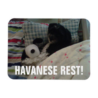 Havanese Rest! Rectangular Photo Magnet