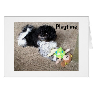 HAVANESE SAYS WISH I COULD PLAY WITH U ON BIRTHDAY CARD
