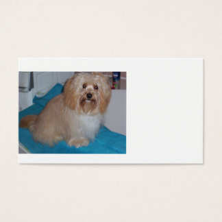 havanese sitting 2.png business card