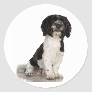 Havanese Stickers