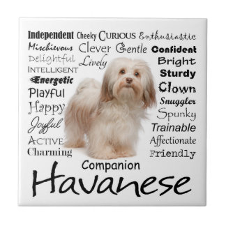 Havanese Traits Ceramic Tile