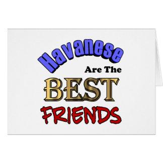 Havaneses Make The Best Friends Card