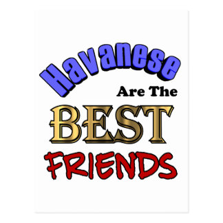 Havaneses Make The Best Friends Postcard