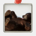 Have a BEARY Good Day!!! Christmas Tree Ornament
