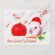 Have a Guinea Pig Christmas Holiday Postcard