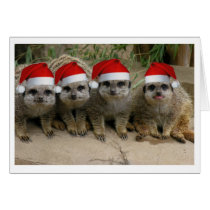 Have a Meerkat Christmas! Card