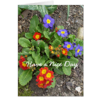 Have a Nice Day-mixed flower bed Greeting Card