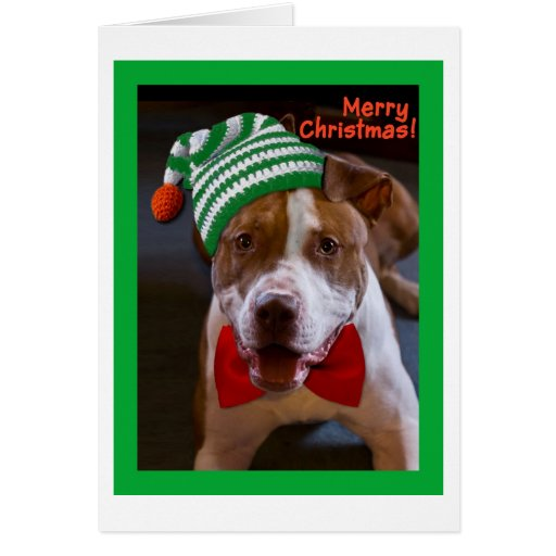 Have a Pit Bull Christmas Greeting Cards