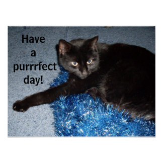 HAVE A PURRFECT DAY, BLACK CAT poster
