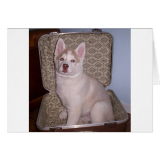 Have Siberian will travel Card