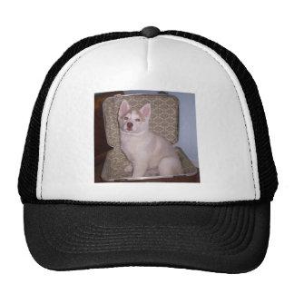 Have Siberian, will travel Trucker Hat