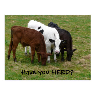 Have you HERD? Three Cows Postcard