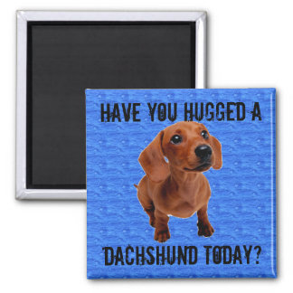 Have you hugged a Dachshund today? 2 Inch Square Magnet
