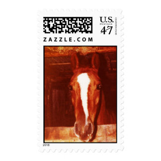 Have You Hugged Your Horse Today? Postage