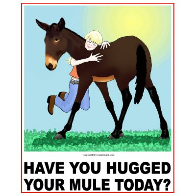 Have you Hugged Your Mule Today? tshirts