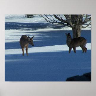 Havenwood Deer Poster
