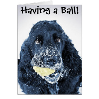 Having a Ball! Greeting Card