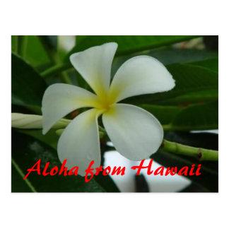 Hawaiana de Hawaii Tarjetas Postales