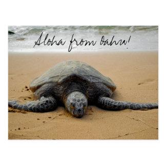 ¡Hawaiana de Oahu! Postal con la tortuga de mar