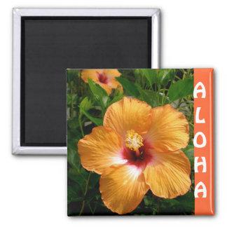 Hawaiana del hibisco de Hawaii Imán Cuadrado