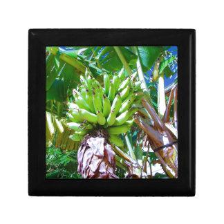 """Hawaii Bannana Tree"" by Carter L. Shepard"" Gift Box"