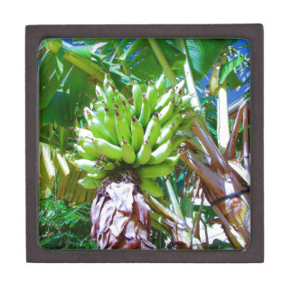 """Hawaii Bannana Tree"" by Carter L. Shepard"" Keepsake Box"